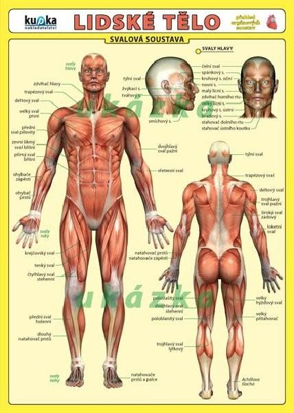 Lidské tělo (skládačka, 8 stran)