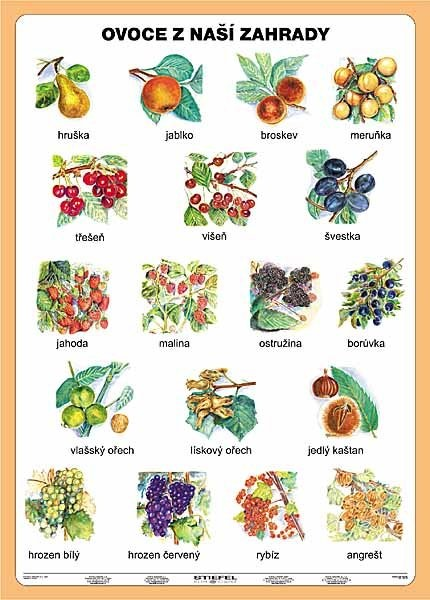 Ovoce z naší zahrady (tabulka, A5)