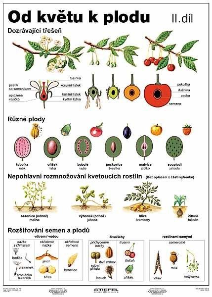 Od květu k plodu II.díl (tabulka, A4)