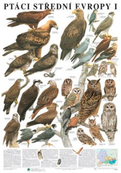 Ptáci střední Evropy I (nástěnná tabule)