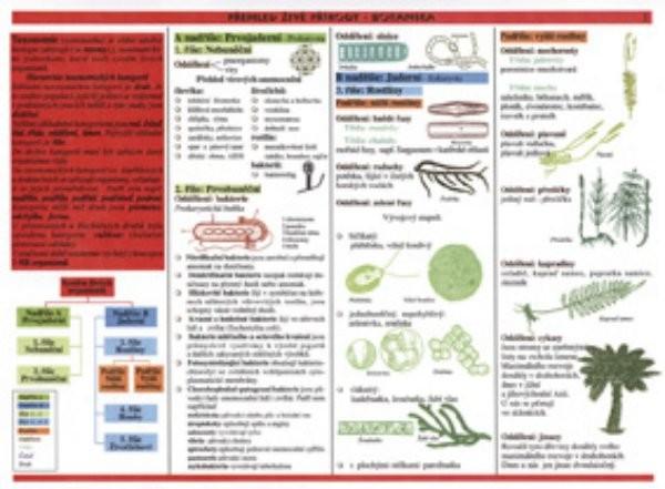 Botanika - Přehled živé přírody (tabulka)