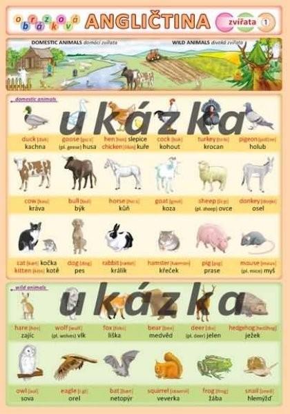 Obrázková angličtina 1 - Zvířata (oboustranná tabulka, A5)