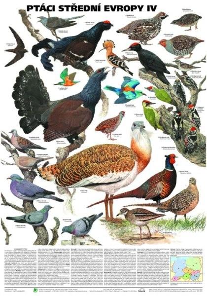 Ptáci střední Evropy IV (nástěnná tabule)