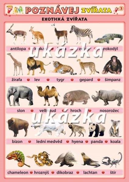 Poznávej 3 - zvířata exotická, ptáci (oboustranná tabulka)