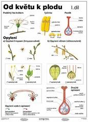 Od květu k plodu I.díl (tabulka A4)