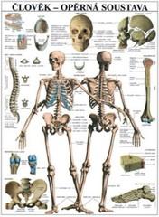 Člověk - opěrná soustava (nástěnná tabule)