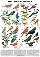 Ptáci střední Evropy V - Pěvci (nástěnná tabule)