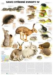 Savci střední Evropy IV (nástěnná tabule)