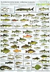Sladkovodní ryby střední Evropy (nástěnná tabule)