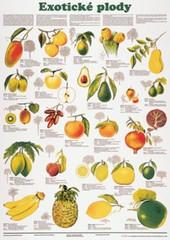 Exotické plody (nástěnná tabule)