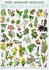 Naše jedovaté rostliny (výuková tabule)