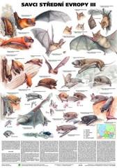 Savci střední Evropy III (nástěnná tabule)