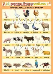 Poznávej 2 - zvířata domácí, volně žijící (oboustranná tabulka)
