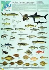 Mořské ryby a paryby (nástěnná tabule)