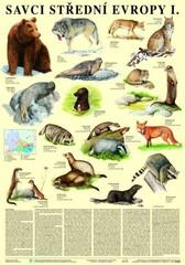 Savci střední Evropy I. - Šelmy (nástěnná tabule)